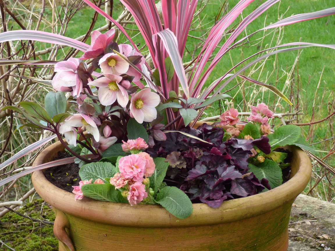 Using six perennials to create a colourful spring planter